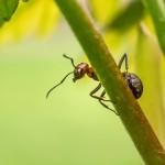 Ameisen im Fertighaus – Wie man die Plagegeister vertreibt