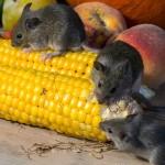 Wie man Mäuse im Fertigteilhaus los wird