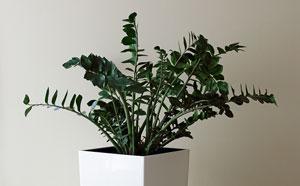 Zimmerpflanze Pflegeleicht pflegeleichte zimmerpflanzen tipps und tricks für ein grünes