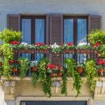 balkonpflanzen-schatten