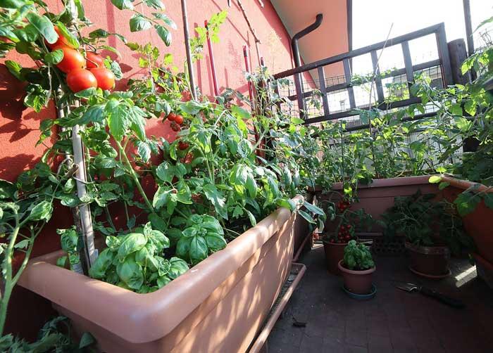 Obst Und Gemuse Am Balkon Anpflanzen Wohn Journal