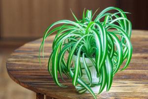 Zimmerpflanzen Für Sonnige Standorte pflegeleichte zimmerpflanzen tipps und tricks für ein grünes