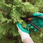 Rückschnitt: Welche Gartenschere wofür?