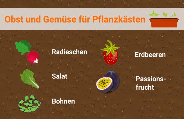 pflanzkasten-obst-gemuese