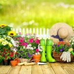 Pflegeleichte Gartenpflanzen für den effizienten Gärtner