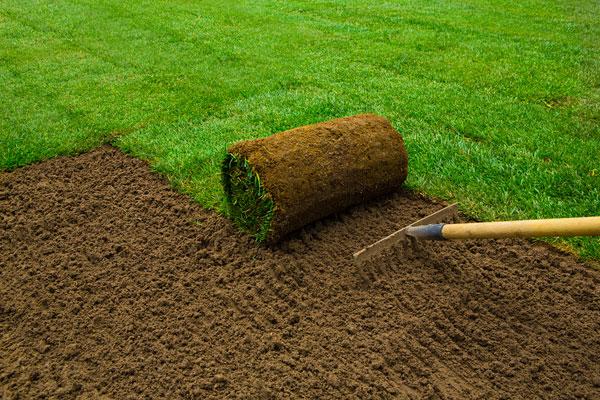 Rasen anlegen das sollten sie wissen wohn journal for Rollrasen anlegen