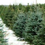 Weihnachtsbaum richtig aufstellen